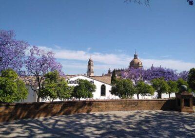 Experiencia «Jerez de Plaza en Plaza»